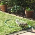 Squirrel, making a getaway